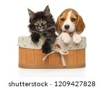 Stock photo kitten and puppy together in basket on a white background baby animal theme 1209427828