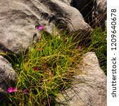 Image Of Pink Wild Flowers And...