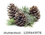 Snowy Spruce Branch With Fir...