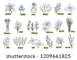 popular culinary herbs  hand... | Shutterstock .eps vector #1209661825