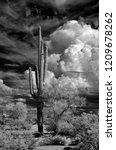 sonora desert in infrared with... | Shutterstock . vector #1209678262