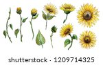 set of elements flowers  buds ... | Shutterstock . vector #1209714325