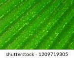abstract illustration green... | Shutterstock . vector #1209719305