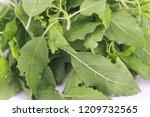 close up macro of fresh green... | Shutterstock . vector #1209732565