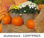 Orange Pumpkins  Chrysanthemum...
