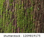 Moss Cover On Tree Bark...