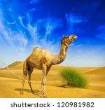 camel desert landscape... | Shutterstock . vector #120981982