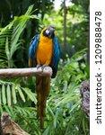 Parrot Ara In Nature