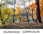 incredibly beautiful autumn... | Shutterstock . vector #1209915145