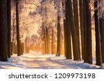winter. frosty trees in forest... | Shutterstock . vector #1209973198