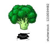 broccoli hand drawn... | Shutterstock . vector #1210034482