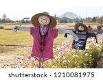 Paddy Field With Scarecrow And...