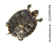 Red Ear Turtle Isolated On...