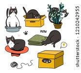 Cute Cat Hiding In Various...