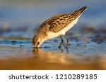 Cute Little Water Bird....