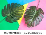 tropical palm leaves on... | Shutterstock . vector #1210303972