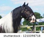 a head shot of a traditional... | Shutterstock . vector #1210398718