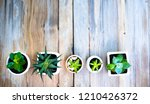 cactus in plant pot on old wood ... | Shutterstock . vector #1210426372