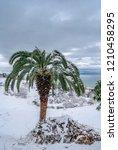 canary island date palm ...   Shutterstock . vector #1210458295