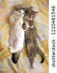 two cute kittens are next to... | Shutterstock . vector #1210481548