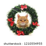 Stock photo cat in a christmas wreath isolated on a white background 1210554955