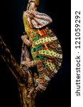 yemen chameleon | Shutterstock . vector #121059292