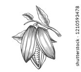 cocoa beans freehand drawing ... | Shutterstock . vector #1210593478