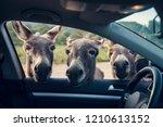 three funny donkeys curiously... | Shutterstock . vector #1210613152