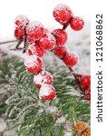Rowan Berries With Spruce...