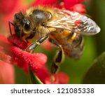 A Bee On A Grevillea Flower