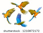set of macaw parrot isolated on ... | Shutterstock . vector #1210872172
