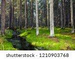 forest river stream green moss...   Shutterstock . vector #1210903768