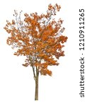 dark orange autumn maple tree... | Shutterstock . vector #1210911265