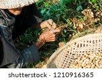 hoi an  vietnam  asia   march... | Shutterstock . vector #1210916365