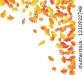 oak  maple  wild ash rowan... | Shutterstock .eps vector #1210932748