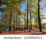 beech forest in autumn  | Shutterstock . vector #1210942912