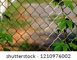 common hop entwined in old... | Shutterstock . vector #1210976002