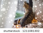Stock photo pets christmas and hygge concept tabby cat looking through window at home in winter over snow 1211081302