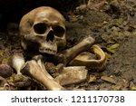 Skull And Bones Digged From Pi...