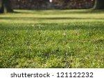 Autumn Grass  Garden