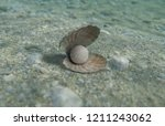 pearl in an oyster shell in the ... | Shutterstock . vector #1211243062