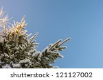 snow covered fir branches in... | Shutterstock . vector #121127002