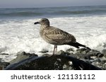 A Seagull Perches On A Rock An...