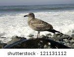 A Seagull Perches On A Rock An...