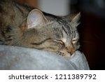 afternoon cat nap   Shutterstock . vector #1211389792
