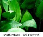 fresh raindrops glisten on the... | Shutterstock . vector #1211404945