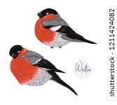 set of 2 bullfinchs.  colored... | Shutterstock .eps vector #1211424082