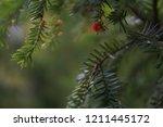 beautiful background of... | Shutterstock . vector #1211445172