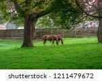 chestnut horse pair in green...   Shutterstock . vector #1211479672