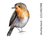 Watercolor Robin. Hand Painted...